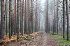 Fog in the forest. On an autumn morning Royalty Free Stock Images