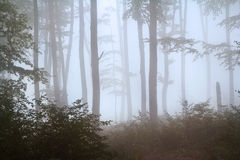 Fog in the forest during autumn Royalty Free Stock Images