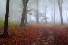 Fog in the forest during autumn Stock Image