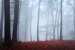 Fog in the forest during autumn Stock Photos