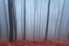 Fog in the forest during autumn Royalty Free Stock Image