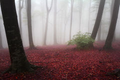 Fog in the forest during autumn Royalty Free Stock Photos