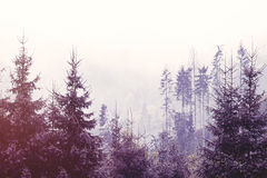 Fog in the forest. In autumn time Stock Photography