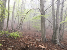Fog in the forest. Stock Photography