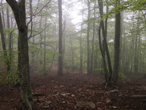 Fog in the forest. Stock Photos