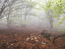 Fog in the forest. Stock Images
