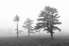 Fog forest Stock Images