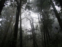 Fog in the forest of Doi Inthanon Mountain, ChiangMai. Thailand Royalty Free Stock Image