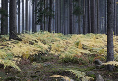 Fog in the forest with ferns Stock Image