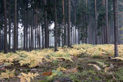 Fog in the forest with ferns Stock Photos