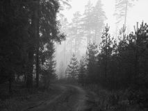 Fog in forest. Foggy day in world greenest country, Latvia Stock Photos