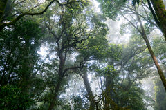 Fog forest. Hard fog in forest, look up view Royalty Free Stock Photo