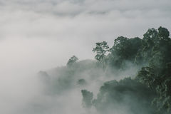Fog forest at high forest in Thailand Royalty Free Stock Photos