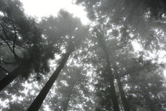 Fog in the forest. Royalty Free Stock Images