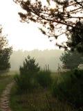 Fog in forest. Käfertalerwald (Kaefertal forest), Mannheim, Deutschland (Germany), 31 October 2014 royalty free stock photo