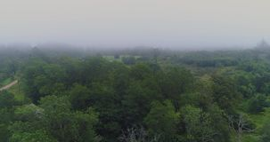 Fog Forest Lake drone flight nature morning outdoor, sunset. Fog Forest Lake drone beautiful, green, morning, natural outdoor sunset stock footage