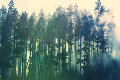 Fog in forest. Magic mist in the forest Stock Photos
