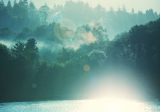 Fog in forest Stock Photos