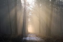 Fog, Forest, Mist, Atmosphere Stock Images
