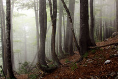 Fog in the forest. Mist and magic in Transylvania, Carpathian mountains, Romania Stock Photos