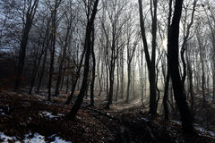 Fog in the forest Stock Image