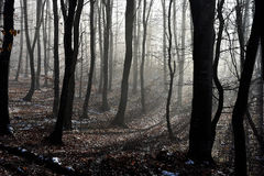 Fog in the forest Stock Images