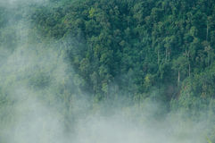 Fog Forest. In the moring Royalty Free Stock Photos