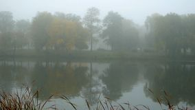 Fog forest morning lake. Fog on the forest morning lake stock footage