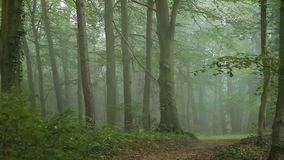 Fog in forest stock video footage