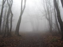 Fog in the forest Royalty Free Stock Photo