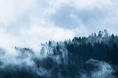 Fog, Forest, Mountain World, Clouds Stock Image