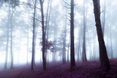 Fog in the forest Royalty Free Stock Photography