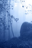 Fog in the forest Stock Photography