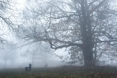 Fog in a forest near the Lake , among the benches Stock Photo