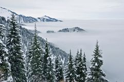 Fog and forest in the north tien shan. Fog and forest. north tien shan november Stock Image