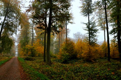 Fog in the forest. Persistent fog in the path of a forest in autumn Royalty Free Stock Images