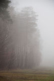 Fog in forest after rain. green forest with fog. Fog in forest after rain. forest with fog stock photos