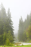 Fog in a forest Stock Images