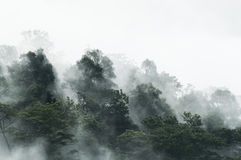 Fog Forest. It's very beautiful Royalty Free Stock Images