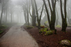 Road in the forest. Fog in the forest in Sintra mountain Royalty Free Stock Images