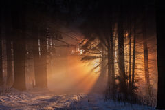Fog in forest Stock Photo