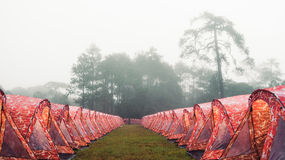 Fog in the forest tent Stock Image