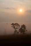 Fog in forest at Thung Salang Luang National Park Phetchabun,Tha Royalty Free Stock Images