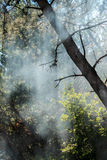 Fog in the forest. Fog between trees in a green forest Royalty Free Stock Images