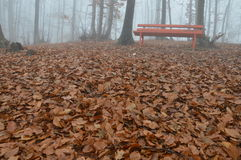 Fog in forest trees Royalty Free Stock Photo