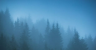 Fog forest trees panorama Stock Image