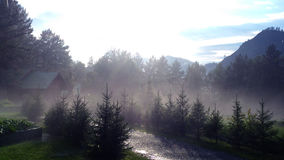 Fog in forest Royalty Free Stock Photos