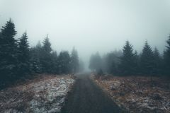 Fog, Forest, Wilderness, Tree Royalty Free Stock Image