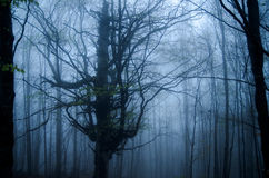 Fog in the forest. Fog in the winter forest Royalty Free Stock Images