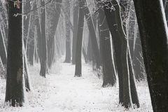 Fog in the forest in winter, mysterious atmosphere background. Fog in the forest in winter, mysterious atmosphere royalty free stock photography
